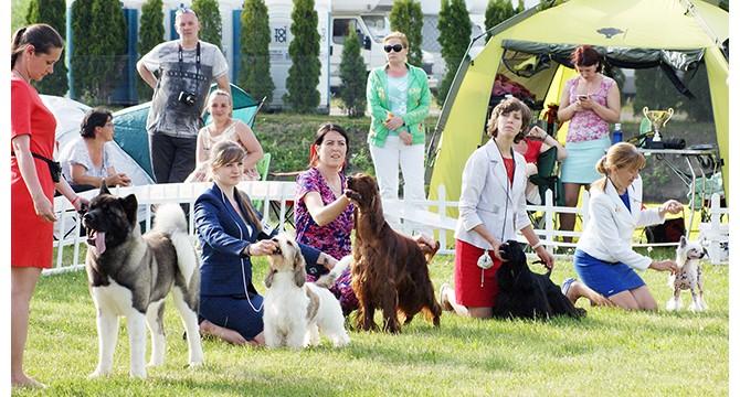 Tris dienas Radžiūnų aerodrome svečiuosis patys gražiausi šunys